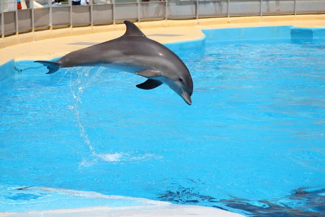 Video rencontre dauphin marineland