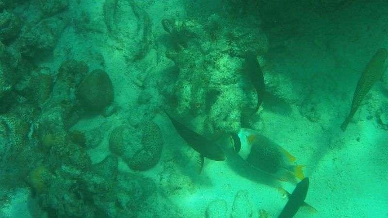 Surin Island 1